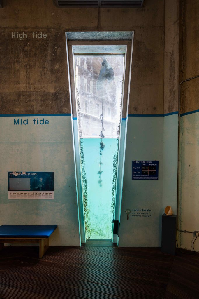 The Tidal Zone at The National Maritime Museum Cornwall. Photo by Luke Hayes